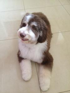Posh puppy!